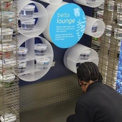 A participant is working on a display shelf at Petco.  ID: A participant wearing a black shirt and rubber gloves.