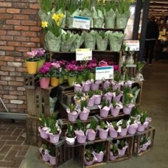 Indoor Flower Display At Whole Foods.